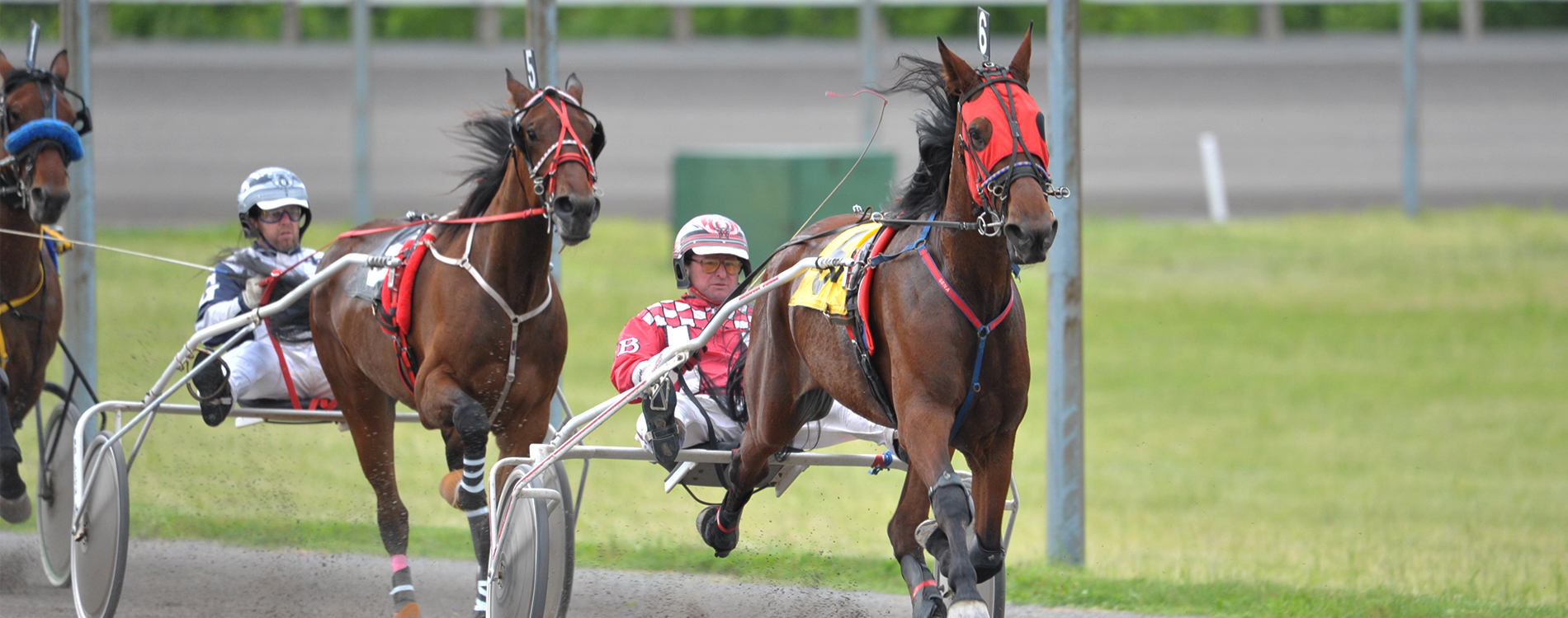 Melissa Keith's Rideau Carleton Selections: Sunday, October 18, 2020