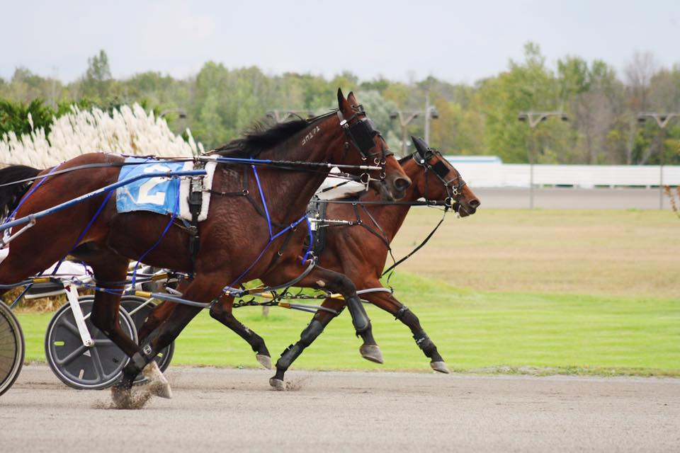 Melissa Keith's Rideau Carleton Selections: Sunday, October 4, 2020