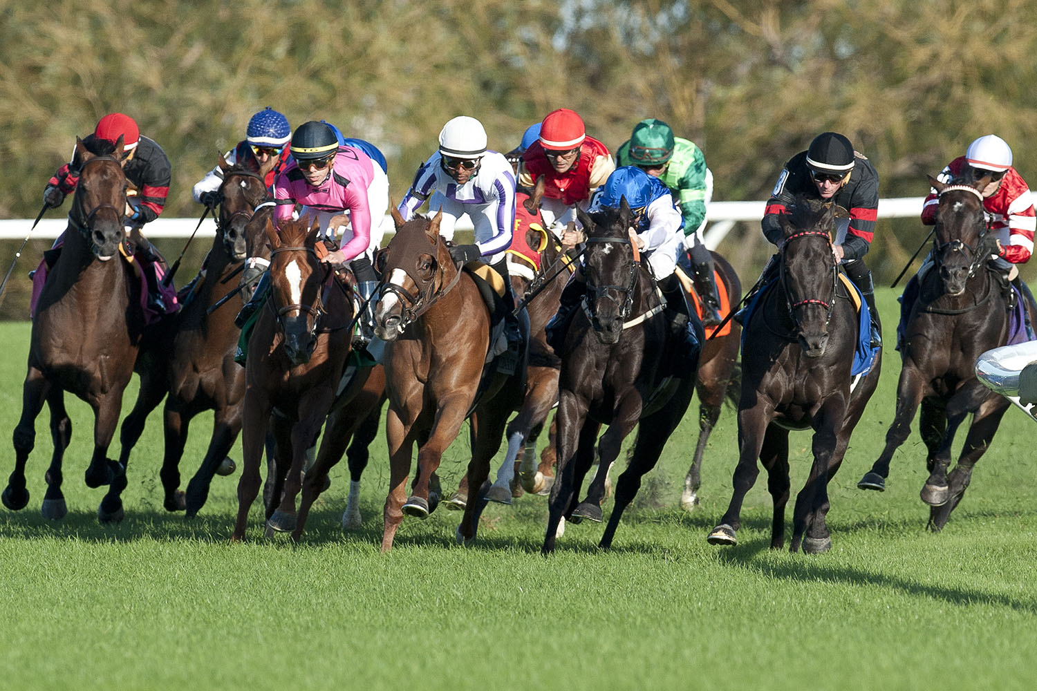 Woodbine horse racing betting odds in early twitter broncos jaguars betting
