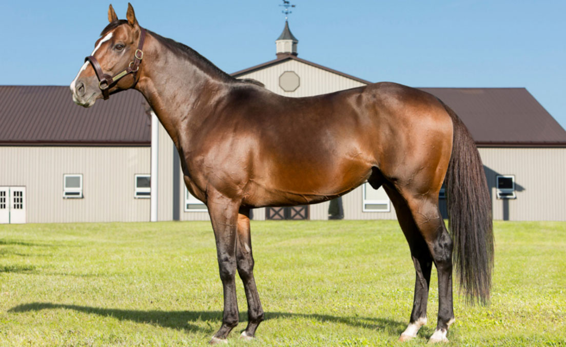 Ontario Stallion Spotlights: Meet The Province's Standout Stars