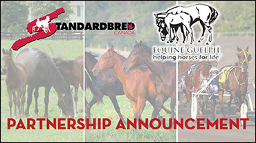 Standardbred Canada and Equine Guelph Partner in Online Training Program & Free Course
