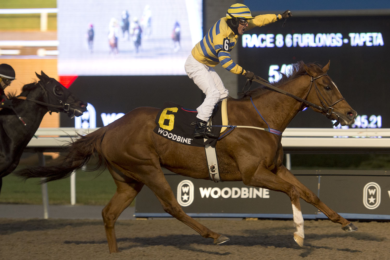 Woodbine CEO desperately worried about the future of the industry